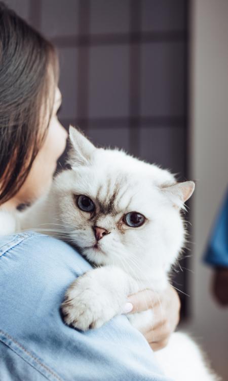 asistencia veterinaria